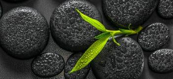 Wierzchołka puszka zbliżenia zdroju piękny skład zieleni gałąź bambo zdjęcia stock