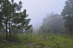 Wierzchołek góra Fotografia Stock