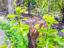 Wierzchołek na drzewie w las Zdjęcia Stock