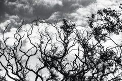 Wierzchołki drzewa, greyscale wizerunek Obraz Royalty Free
