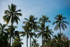 Wierzchołki drzewka palmowe przeciw niebieskiemu niebu Zdjęcia Royalty Free