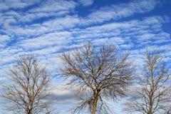 Wierzchołki trzy nagiego drzewa przeciw genialnym niebieskim niebom Fotografia Royalty Free