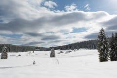Wiese bedeckt mit Schnee Stockfotos