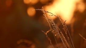 Wiese bei Sonnenuntergang stock footage