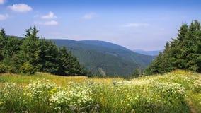Wiese, Blumen und Berge Stockbild