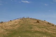 Wiese in Carpathions-Berg lizenzfreie stockbilder