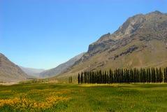 Wiese in Chile Stockbild
