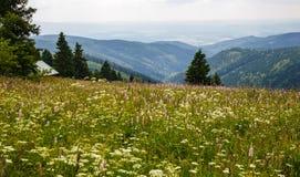 Wiese in den Bergen im Sommer Stockfotografie