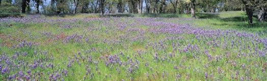 Wiese der purpurroten Blumen Stockbild