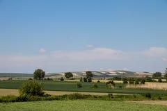 Wiese in der Vojvodinaregion Serbien, kultiviert mit Mais und Gem?se, nahe Zrenjanin-Stadt, am 18. Mai 2019 stockfotografie