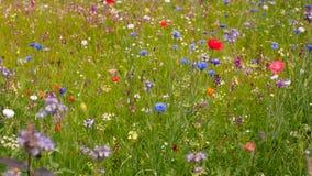 Wiese der wilden Blume lizenzfreie stockbilder