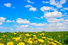 Wiese der wilden Blume Stockfotografie