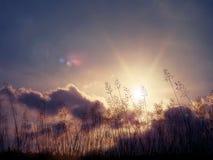Wiese der wilden Blumen über Sonnenunterganghintergrund Lizenzfreies Stockfoto
