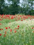 Wiese der wilden Blumen Lizenzfreies Stockbild