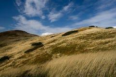 Wiese des Berges Lizenzfreies Stockbild
