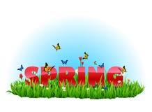 Wiese des grünen Grases des Frühlinges Stockfoto