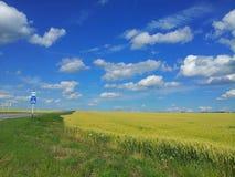 Wiese des Weizens Schöne Landschaft Busstoppschild am Straßenrand Stockbild