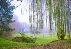 Wiese, die in Nebel sinkt Lizenzfreies Stockbild