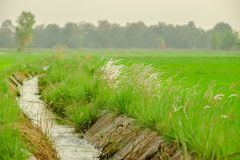 Wiese, die Niederlande, Friesland - die Niederlande, Entwässerung, Kanal Lo Lizenzfreie Stockbilder