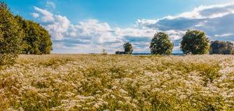Wiese an einem heißen Sommertag Stockfotografie