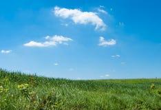 Wiese an einem sonnigen Tag Stockfotografie