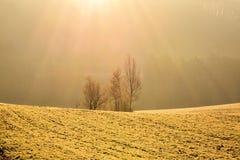 Wiese gewärmt durch Sonnenstrahlen Stockbild