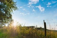 Wiese im direkten Sonnenlicht mit Baum und Zäunen Stockfotografie
