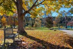 Wiese im Herbstpark mit Bank unter großem Baum Lizenzfreies Stockbild