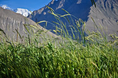Wiese im Wakhan Tal lizenzfreies stockbild