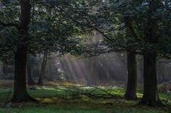 Wiese im Wald lizenzfreies stockfoto