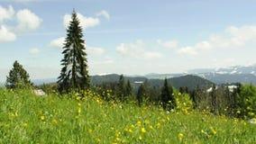 Wiese im Wind mit Ansicht zu den Alpen in Österreich