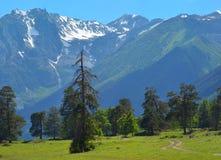 Wiese in Kaukasus Stockbild