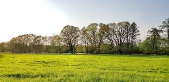Wiese mit Bäumen lizenzfreie stockfotos