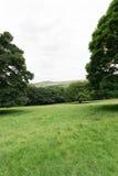 Wiese mit Bäumen Stockfotografie