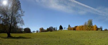 Wiese mit Baum und grünem Gras Stockfotografie