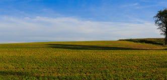 Wiese mit Baumschatten im Ackerlandbereichs-Tagessommer Lizenzfreie Stockfotos