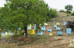 Wiese mit Bienenbienenstöcken Lizenzfreies Stockbild