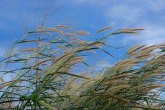 Wiese mit blauem Himmel Stockfotografie