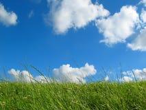 Wiese mit blauem Himmel Stockfotos