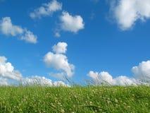 Wiese mit blauem Himmel Lizenzfreies Stockfoto