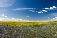 Wiese mit blauen Blumen Stockfoto