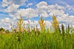 Wiese mit blossing Blumen unter Wolken Stockfoto