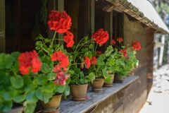 Wiese mit Blumen Stockbilder