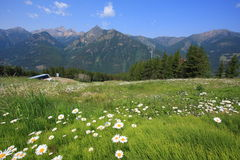 Wiese mit Blumen und Berg im Hintergrund Stockfotografie