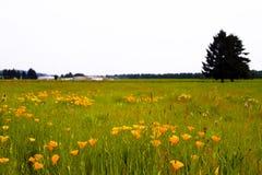Wiese mit Blumen und Gras- und Baumschattenbild Stockfotografie