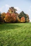 Wiese mit bunten Herbstbäumen und blauer Himmel in Karvina-Stadt in der Tschechischen Republik stockbild