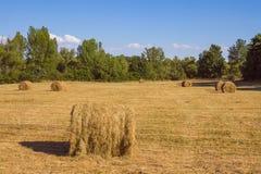 Wiese mit dem Gras gemäht Lizenzfreies Stockfoto