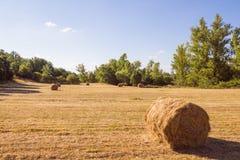 Wiese mit dem Gras gemäht Stockbilder