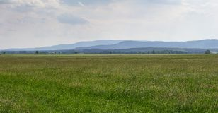 Wiese mit Frühlingsblume, -hügel und -himmel Tschechische Landschaft Stockfotografie