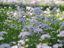 Wiese mit Frühlingsblumen lizenzfreie stockbilder